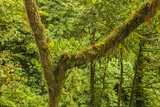 Central America, Costa Rica. Monteverde Rain Forest Photographic Print by Jaynes Gallery