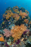 Indonesia, West Papua, Raja Ampat. Coral Reef and Fish Photographic Print by Jaynes Gallery