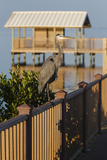 Interpretive Boardwalk at South Padre Island Birding and Nature Center Photographic Print by Larry Ditto