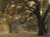 Africa, Zambia. Sunset on Forest Photographic Print by Jaynes Gallery