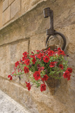 Italy, Tuscany, Pienza. Colorful Petunias Spill from a Basket on a Stone Wall Photographic Print by Brenda Tharp