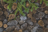 Nevada, Great Basin National Park. Pine Cones and Douglas Fir Bough Photographic Print by Jaynes Gallery