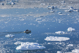 Greenland, Disko Bay, Ilulissat, Elevated View of Floating Ice and Fishing Boat Photographic Print by Walter Bibikow