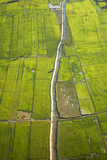 Rice Fields Near Siem Reap, Cambodia Photographic Print by David Wall
