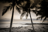 Coconut Palms and Surf at Dusk, Kailua-Kona, Hawaii, Usa Photographic Print by Russ Bishop