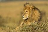 Adult Male Lion Resting on Termite Mound, Masai Mara, Kenya Photographic Print by Adam Jones