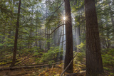 Sun Rays Penetrate Forest Floor at Ross Creed Cedar Grove in Kootenai National Forest, Montana Photographic Print by Chuck Haney