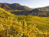 Village Spitz Nested in the Vineyards of the Wachau. Austria Fotografisk trykk av Martin Zwick