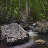 Little Stony Creek, Jefferson National Forest, Virginia Photographic Print by Tim Fitzharris