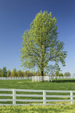 White Horse Fences and Tree in New Spring Foliage, Lexington, Kentucky Photographic Print by Adam Jones