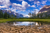 Driftwood and Pond, Saint Mary Lake, Glacier National Park, Montana Photographic Print by Russ Bishop
