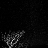 Utah, Capitol Reef National Park. Dead Tree and Night Sky Photographic Print by Jaynes Gallery