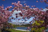 Spring Blossom, Lake Wakatipu and the Remarkables, Queenstown, Otago, South Island, New Zealand Photographic Print by David Wall