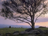 Silhouetted Tree in Doughton Park, Blue Ridge Parkway, North Carolina, Usa Photographic Print by Tim Fitzharris