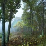 Oak Trees at Hemlock Springs Overlook, Shenandoah National Park, Virginia Photographic Print by Tim Fitzharris