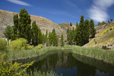 Pond, Reeds and Poplar Trees, Bannockburn, Central Otago, South Island, New Zealand Photographic Print by David Wall