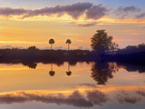 Silhouetted Scenic, Everglades National Park, Florida, Usa Photographic Print by Tim Fitzharris