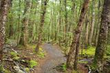 Forest in Fiordland National Park, Te Anau, New Zealand Reproduction photographique par Paul Dymond
