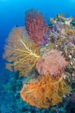 Indonesia, Forgotten Islands. Coral Reef Scenic Photographic Print by Jaynes Gallery