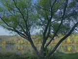 Willow Tree at Lackawanna Lake in Fall, Lackawanna State Park, Pennsylvania, Usa Photographic Print by Tim Fitzharris