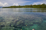 Giant Clams in the Clear Waters of the Marovo Lagoon, Solomon Islands, Pacific Photographic Print by Michael Runkel