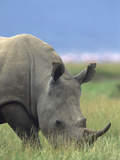 White Rhinoceros, Kenya, Africa Photographic Print by Tim Fitzharris