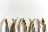 Fresh Anchovies on White Background Photographic Print by Nico Tondini