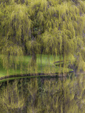 Washington State, Bainbridge Island. Weeping Willow and Pond Photographic Print by Jaynes Gallery