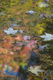 Autumn Reflections on Hidden Lake, Delaware Water Gap National Recreation Area, Pennsylvania Photographic Print by Judith Zimmerman