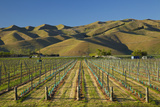 Vineyard and Wither Hills, Near Blenheim, Marlborough, South Island, New Zealand Photographic Print by David Wall