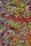 Lichen on Red Rock Formations Near Flagstaff, Arizona Photographic Print by Jaynes Gallery