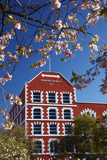 Blossom and Historic Crown Mills Building, Dunedin, Otago, South Island, New Zealand Photographic Print by David Wall