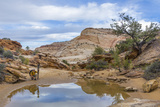 Utah, Capitol Reef National Park. Photographer Surveys Scenic Photographic Print by Jaynes Gallery