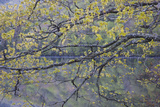 Canada, Novs Scotia, Cape Breton, Cabot Trail Lake in Spring Photographic Print by Patrick J. Wall