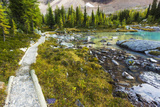 Opabin Plateau Trail Above Lake O'Hara, Yoho National Park, British Columbia, Canada Photographic Print by Russ Bishop