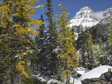 Larch Trees Below Mount Huber, Yoho National Park, British Columbia, Canada Photographic Print by Tim Fitzharris