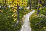 Opabin Plateau Trail Above Lake O'Hara, Yoho National Park, British Columbia, Canada Photographic Print by Russ Bishop
