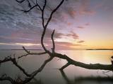Flamingo Bay, Everglades National Park, Florida, Usa Photographic Print by Tim Fitzharris