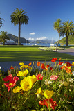 Flowers and Palm Trees, Foreshore Reserve, Picton, Marlborough Sounds, South Island, New Zealand Photographic Print by David Wall