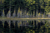 Maine, Baxter State Park, Reflections on Abol Pond Photographic Print by Judith Zimmerman