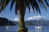 Palm Tree and Boats Moored in Picton Harbour, Marlborough Sounds, South Island, New Zealand Photographic Print by David Wall