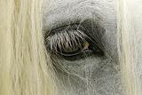 Close-Up Details of Gypsy Vanner Horse Eyeball, Crestwood, Kentucky Photographic Print by Adam Jones