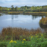 Marshlands Near Pike Lake, Minnesota Photographic Print by Tim Fitzharris