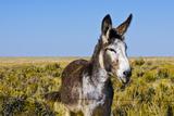 New Mexico, Bisti/De-Na-Zin Wilderness, Donkey Photographic Print by Bernard Friel