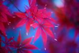 Autumn Fantasy Photographic Print by Philippe Sainte-Laudy