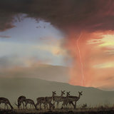 Impala and Lighting, Kenya, Africa Photographic Print by Tim Fitzharris
