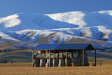 Hay Shed and Hawkdun Range, Maniototo, Central Otago, South Island, New Zealand Photographic Print by David Wall
