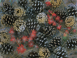 Ponderosa Pine Cones and Indian Paintbrushes, Utah Usa Photographic Print by Tim Fitzharris