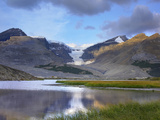 Snow Dome, Dome Glacier, Mount Kitchener, Columbia Icefield, Jasper National Park, Alberta, Canada Photographic Print by Tim Fitzharris
