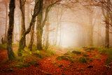 Yellow Forest Mist Photographic Print by Philippe Sainte-Laudy